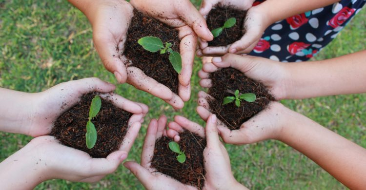 Hands holding sapling in soil surface over green grass background.