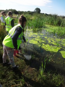 Wetlands and kids 4